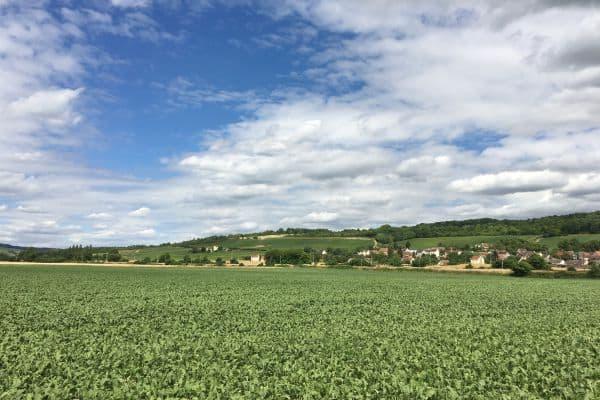 A travers les vignes dans la vallee de la marne - Rando Navigo - randonnées 77